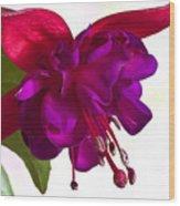 Fuschia Blossom Macro  Wood Print