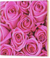 Fuschia Colored Roses Wood Print