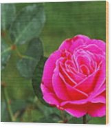 Fuschia Rose Wood Print