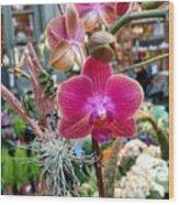 Fushia Orchid Wood Print