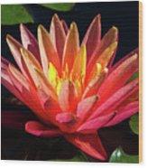 Fushia Waterlily 1 Wood Print