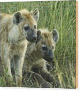 Fuzzy Baby Hyenas Wood Print