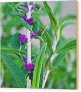 Salvia At Pilgrim Place In Claremont-california  Wood Print