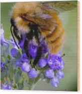 Fuzzy Honey Bee Wood Print