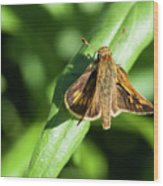 Fuzzy Moth Wood Print