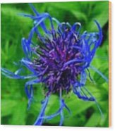 Fuzzy Purple Flower Wood Print