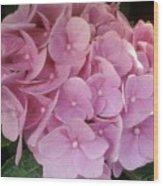 Fwc Beautiful Pink Hydrangea Wood Print