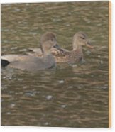 Gadwall Pair Wood Print