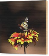 Gaillardia And Butterfly Wood Print