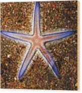 Galapagos Colorful Seastar Wood Print