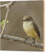 Galapagos Flycatcher - Isabela Island, Galapagos Wood Print