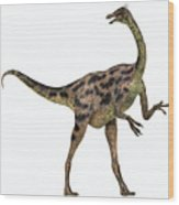 Gallimimus On White Wood Print