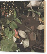 Gallito Loner Wood Print