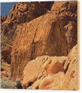 Gambels Quail In Profile Valley Of Fire Wood Print