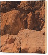 Gambels Quail Valley Of Fire Wood Print