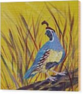 Gamble Quail Wood Print by Summer Celeste