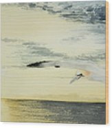 Gannet At Dusk Wood Print
