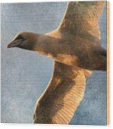 Gannet In Flight 2 Wood Print
