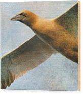 Gannet In Flight Wood Print