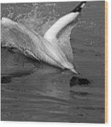 Gannet Northern Morus Bassan Setting On The Ocean Surface Wood Print