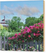 Garden Fence And Roses Wood Print