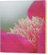 Garden Flamenco II Wood Print