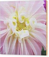 Garden Floral Art Pink Dahlia Flower Baslee Troutman Wood Print
