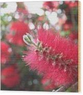 Garden Flower 6 Wood Print