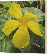 Garden Flower In Kwajalein Wood Print