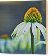 Bristle Flower Wood Print