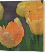 Garden Glory Wood Print