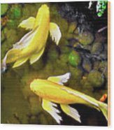 Garden Goldenfish Wood Print