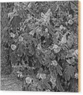 Garden Hydrangeas In Grayscale Wood Print