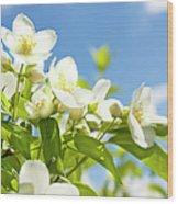 Garden Jasmin Wood Print