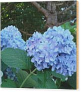 Garden Landscape Blue Hydrangeas Art Print Baslee Troutman Wood Print