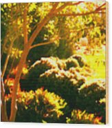 Garden Landscape On A Sunny Day Wood Print