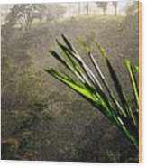 Garden Of Eden Rain Wood Print