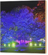 Garden Of Light By Kaye Menner Wood Print