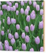 Garden Of Pink Tulips Wood Print