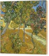 Garden Of Saint Paul's Hospital Wood Print by Vincent van Gogh