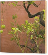 Garden Of The Alcazar Wood Print
