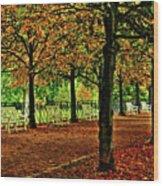 Garden Path, Schloss Biebrich Wood Print