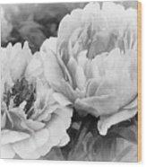 Garden Peonies Wood Print