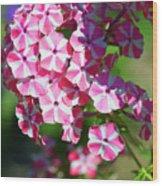 Garden Phlox Wood Print