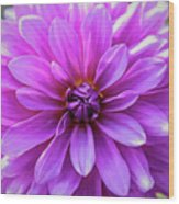 Garden Pink Wood Print