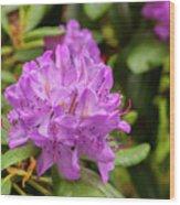 Garden Rhodoendron Plant Wood Print