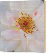 Garden Rose Blush Wood Print