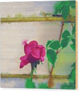 Garden Rose Wood Print