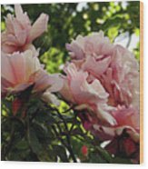 Garden Roses 2 Wood Print