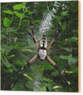 Garden Spider Wood Print